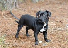 逗人喜爱的黑小猎犬达克斯猎犬混合了品种狗笨蛋 免版税库存照片