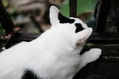 逗人喜爱的黑白加州t坐大阳台 免版税库存图片