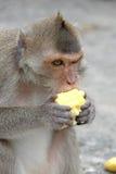 逗人喜爱的猴子在泰国的一个自然森林居住, 免版税库存照片