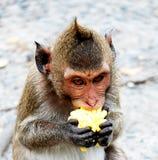 逗人喜爱的猴子在泰国的一个自然森林居住 免版税库存图片