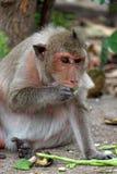 逗人喜爱的猴子在泰国的一个自然森林居住 免版税图库摄影