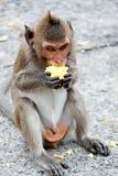 逗人喜爱的猴子在泰国的一个自然森林居住 免版税库存照片