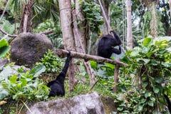 逗人喜爱的猴子在热带巴厘岛,印度尼西亚动物园里  一只逗人喜爱的猴子在巴厘岛一个自然森林居住 免版税库存图片