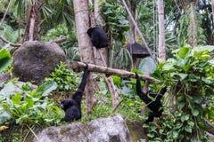 逗人喜爱的猴子在热带巴厘岛,印度尼西亚动物园里  一只逗人喜爱的猴子在巴厘岛一个自然森林居住 库存图片