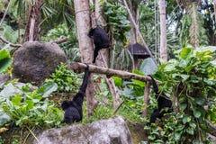 逗人喜爱的猴子在热带巴厘岛,印度尼西亚动物园里  一只逗人喜爱的猴子在巴厘岛一个自然森林居住 库存照片