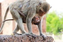 逗人喜爱的猴子 图库摄影