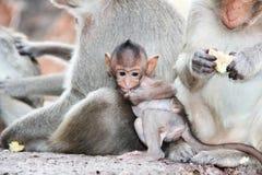 逗人喜爱的猴子 库存照片