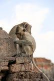 逗人喜爱的猴子 免版税库存照片