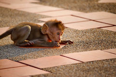 逗人喜爱的猴子 免版税库存图片