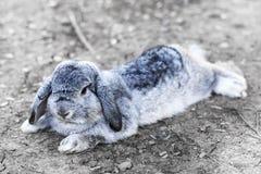 逗人喜爱的婴孩小兔 图库摄影