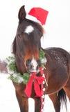 逗人喜爱的黑暗的与圣诞老人帽子的海湾阿拉伯马 免版税库存照片