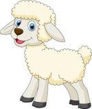 逗人喜爱的绵羊动画片 库存图片