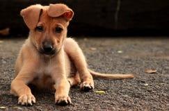 逗人喜爱的离群小狗 库存照片