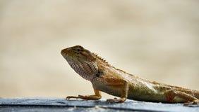 逗人喜爱的绿蜥蜴坐沙子 库存照片