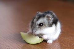 作文吃一个苹果吃食仓鼠描写的乌龟图片