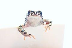 逗人喜爱的frogwith看板卡 免版税库存照片