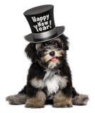 逗人喜爱的havanese小狗戴新年快乐高顶丝质礼帽 免版税库存图片