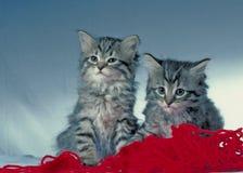 逗人喜爱的kittens4 免版税库存照片