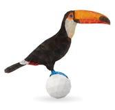 逗人喜爱的Toucan坐球 免版税库存图片