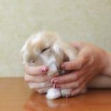 逗人喜爱砍有耳的小兔子 免版税库存图片