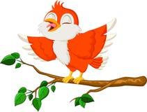 逗人喜爱红色鸟唱歌 库存照片