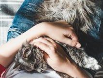 逗人喜爱,甜小猫,说谎在他的女主人的膝部 免版税库存图片
