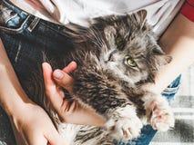 逗人喜爱,甜小猫,说谎在女性手上 库存照片