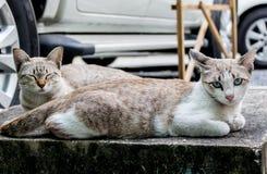 逗人喜爱2只猫的背景 免版税库存图片