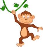逗人喜爱猴子动画片垂悬 库存照片