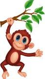 逗人喜爱猴子动画片垂悬 免版税库存照片