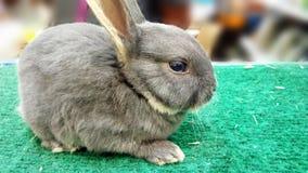 逗人喜爱婴孩的兔宝宝 免版税图库摄影
