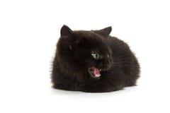 逗人喜爱黑小猫哭泣 免版税库存照片