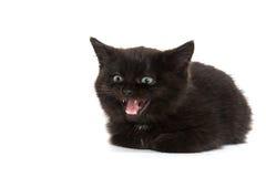 逗人喜爱黑小猫哭泣 免版税库存图片