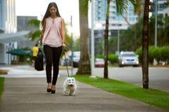 通勤对有她的狗的办公室的女实业家 库存照片