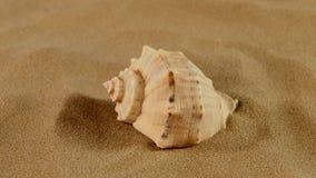 通常海洋贝壳的边在沙子的,自转 影视素材