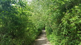 通往森林的一个道路 图库摄影
