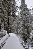 通往森林的道路-幽鹤国家公园 库存照片