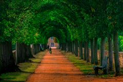 通往绿色公园的道路在一秋天天 免版税库存图片