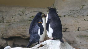 通心面企鹅 影视素材