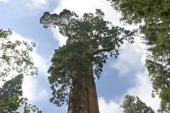 通用结构树 免版税库存图片