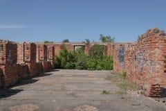 通过一个未完成的大厦的水泥地板,树发芽了 免版税库存图片