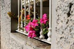 通过一个白色露出的窗口偷看的好和美丽的桃红色花花束 库存照片