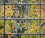 通过一个老教会窗口被看见的橙色秋叶 免版税库存照片