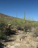 通过一片沙漠晃动路在南亚利桑那 免版税图库摄影
