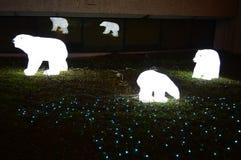 通过光亮显示-北极熊走 免版税图库摄影
