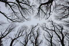 通过入天空树枝 免版税图库摄影