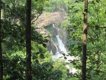 通过厚实的森林落 免版税库存照片