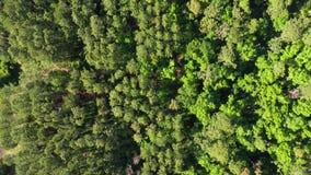 通过在树木繁茂区的鸟瞰图 影视素材