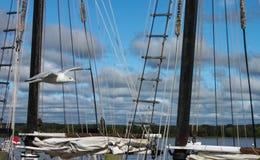 通过帆船索具和绳索的海鸥飞行在与岸和多云天空的stomy天在背景中 免版税库存照片