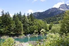 通过杉树和花的河 库存图片
